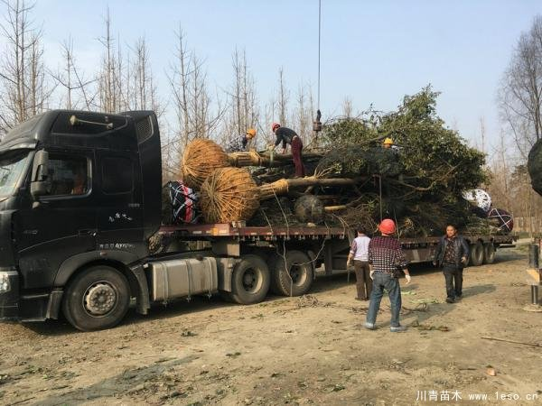 温江黄果树发往达州宣汉