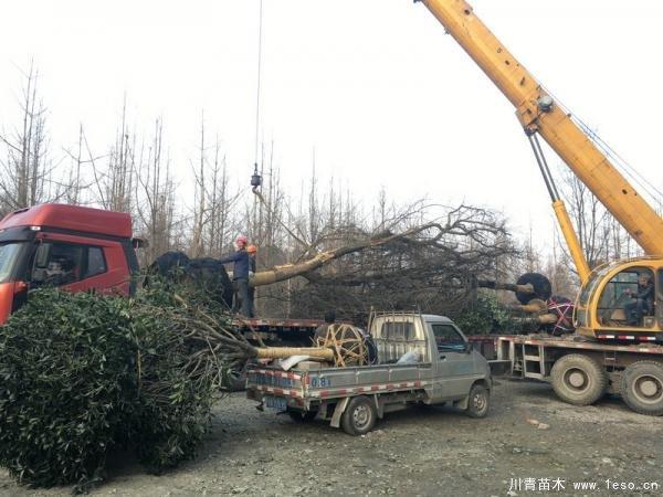 温江皂角树发往重庆