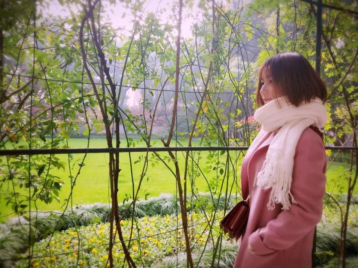 2020年城市全能景观、绿化用树「西府海棠」